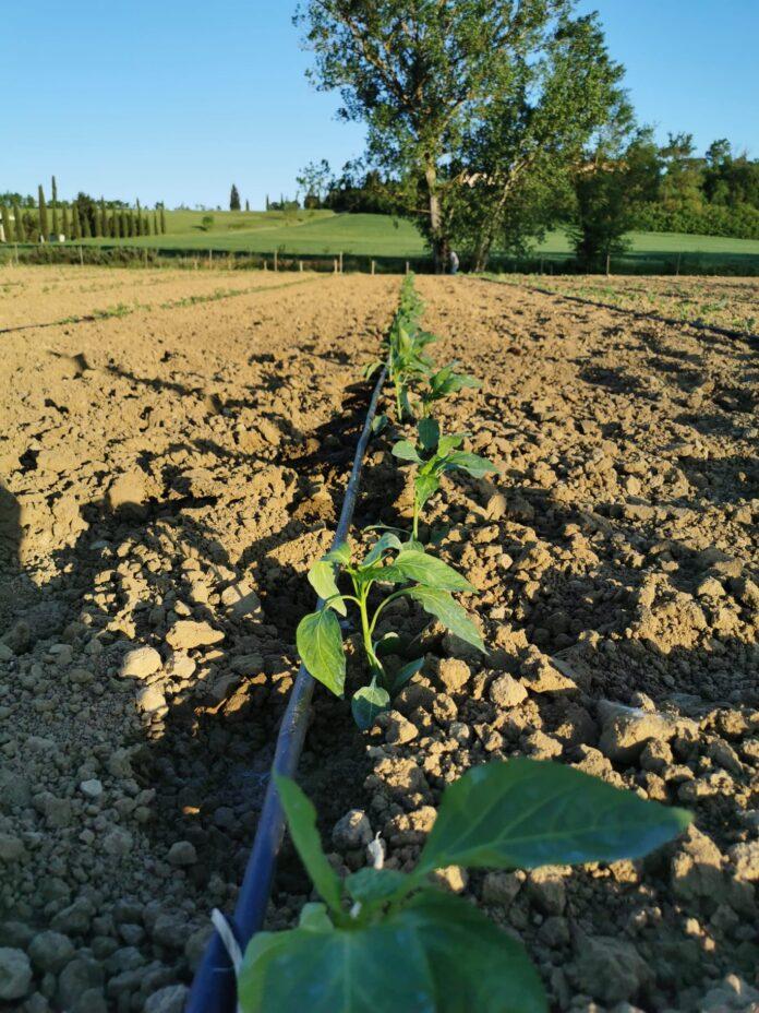 azienda agricola, agricoltura